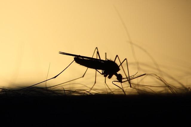 Zagrożenia związane z komarami i ich zwalczanie